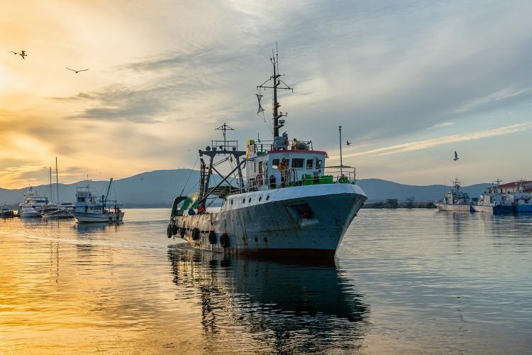 Sector marítimo pesquero.
