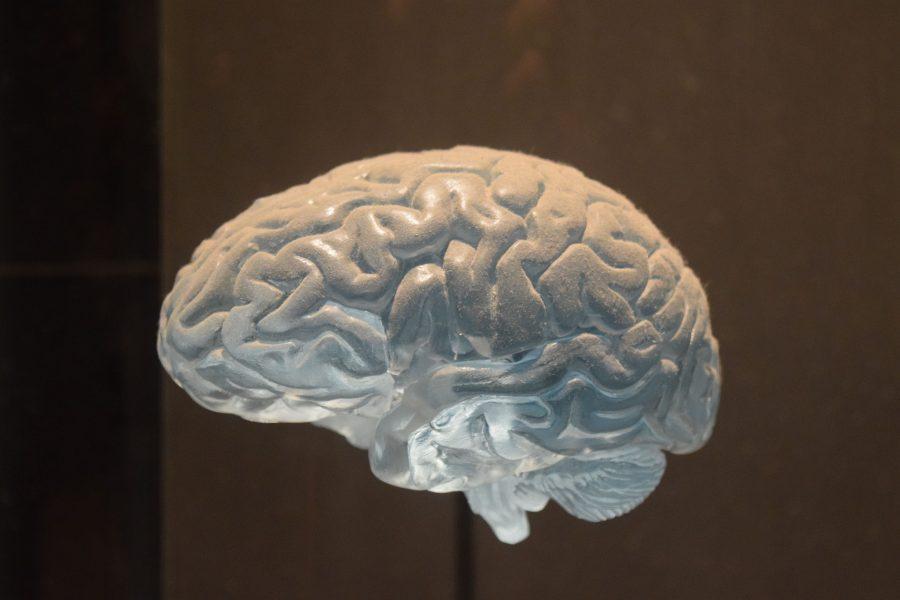 Sistema nervioso.